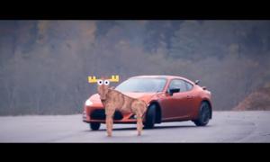 Autíčkářovy názory, TopX: Neobvyklé automobilové testy: Moose test