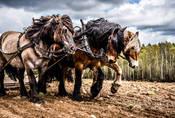 O koních, ponících a síle aneb jak a v čem měříme výkon auta?