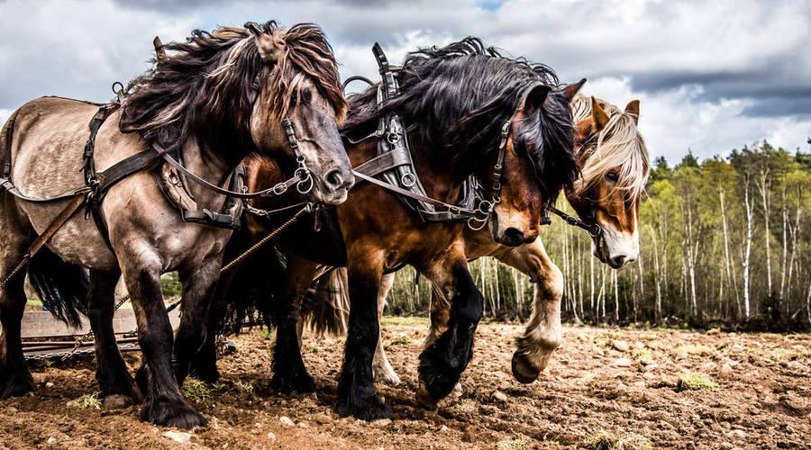 Editorial: O koních, ponících a síle aneb jak a v čem měříme výkon auta?