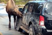 Nenechávejte losy lízat vaše auto