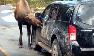 Novinky: Nenechávejte losy lízat vaše auto